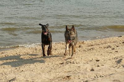 Dog Walks 2012