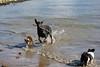 Hondenwandelingen8