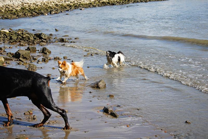 Hondenwandelingen4