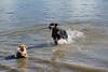 Hondenwandelingen9