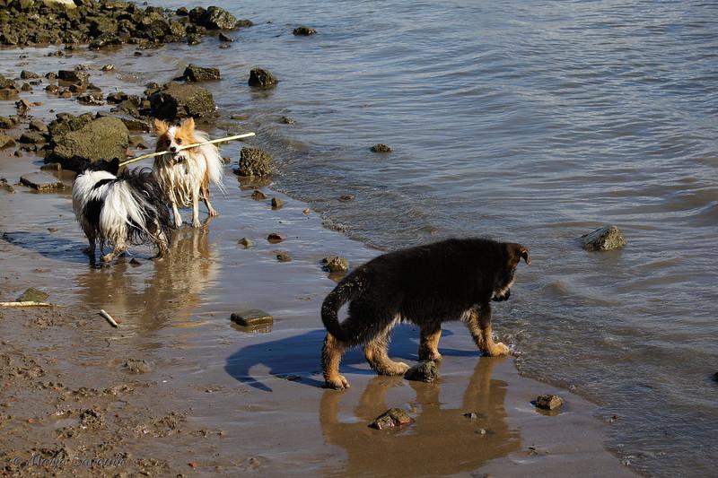 Hondenwandelingen10