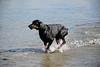 Hondenwandelingen2