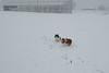 Lou en Roc in de sneeuwstorm