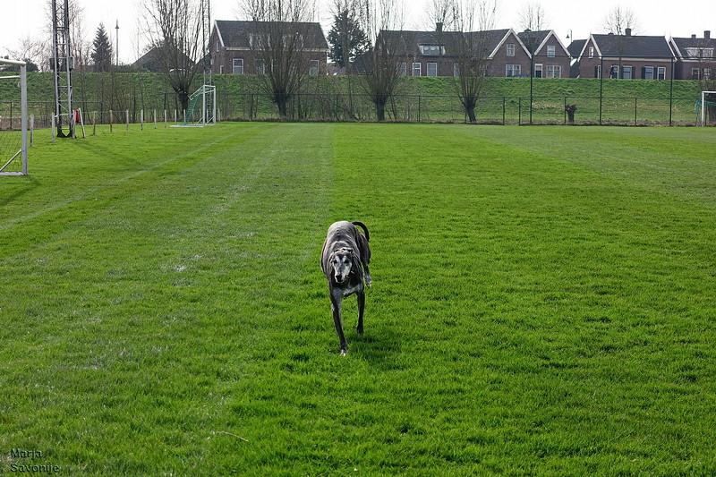 Murphy rent over het voetbalveld