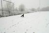 Fab en Pim in de sneeuw