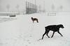 Pim en Fabio in de sneeuwstorm