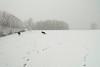 Pim en Fab in de sneeuw op het voetbalveld