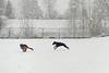 Fabio en Pim spelend in de sneeuw