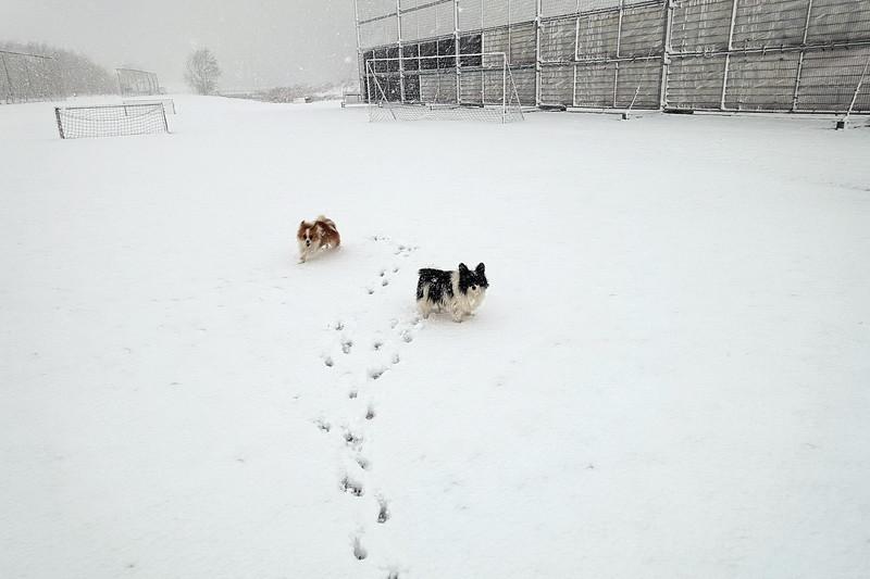 Loulou en Rocco in de sneeuw