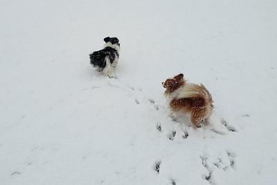 Kleintjes in de sneeuwstorm