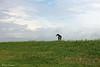 Spanish dog in Dutch landscape