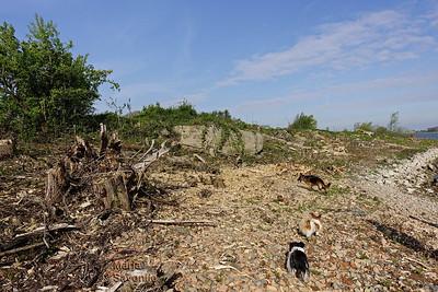 Hondjes langs de verwoesting
