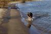 Pimmie rent het water uit