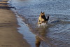 Pimmie rent in het water