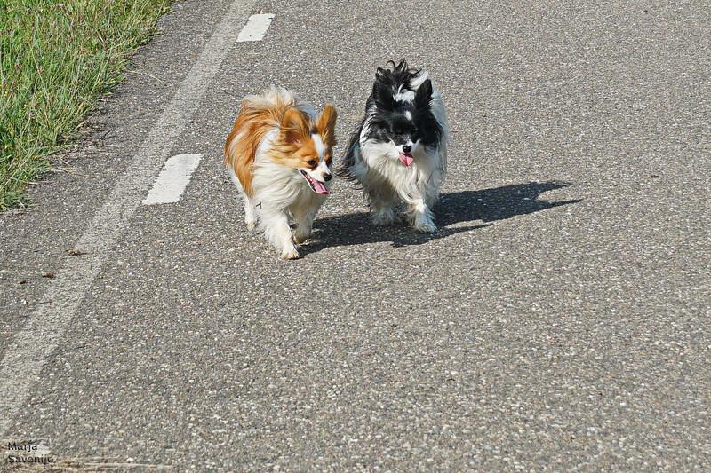 Rocco en Loulou