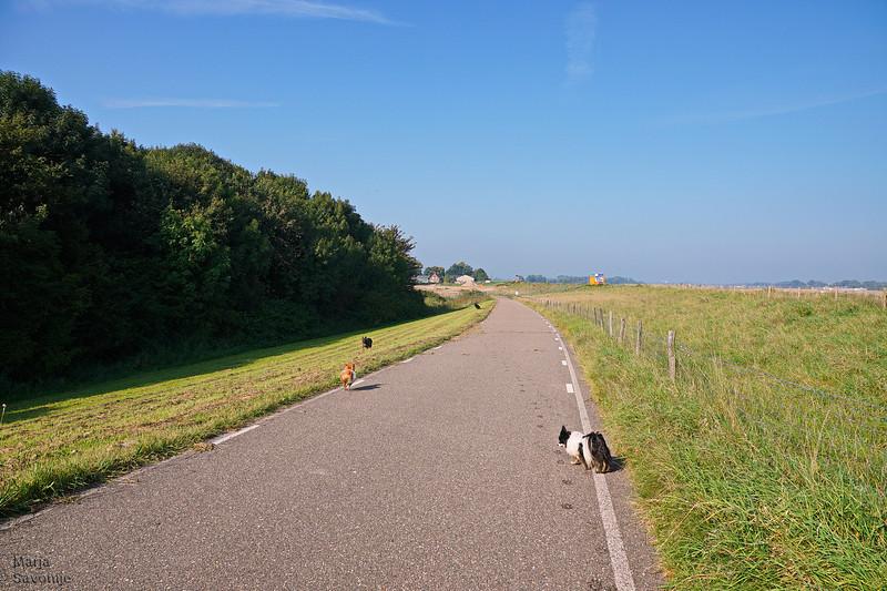 Met de hondjes naar het Munnikenland