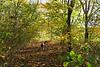 Murphy tussen de herfstbladeren