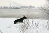 Fabio in de sneeuw2