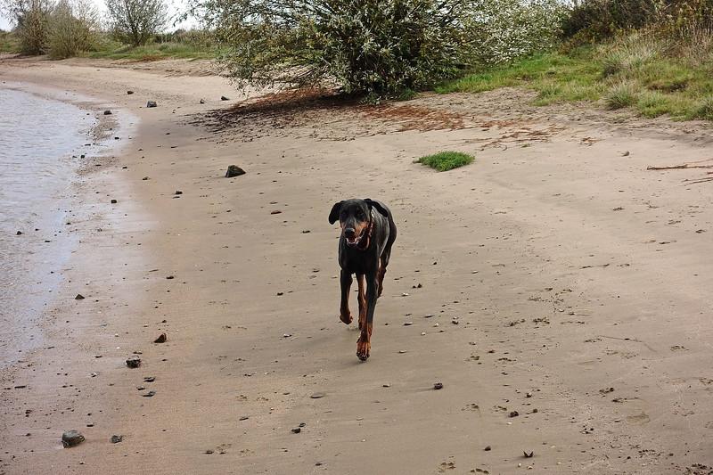 Fabje op het strand4