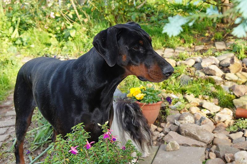 Fabio in de tuin