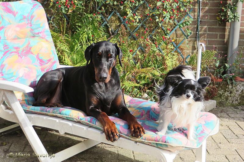 Fabio en Loulou in de zon