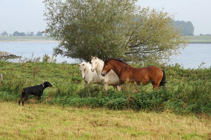Fabio paarden