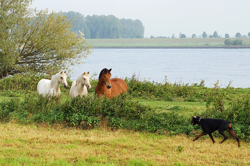Paarden Fabio