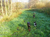 Fabio, Loulou, Kees and Gina on our daily walk