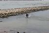 Murphy springt in het water