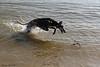 Murphy duikt naar een stok