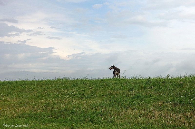 Spanish dog in Dutch landscape
