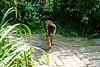 Pimmie in de tuin