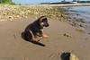 Pimmetje op het strand