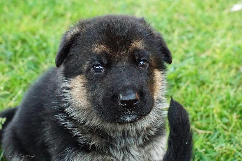 Puppies23