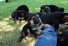Puppies12