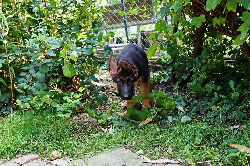 Pimmie in de tuin2