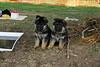 Primo (rechts) met zijn broer