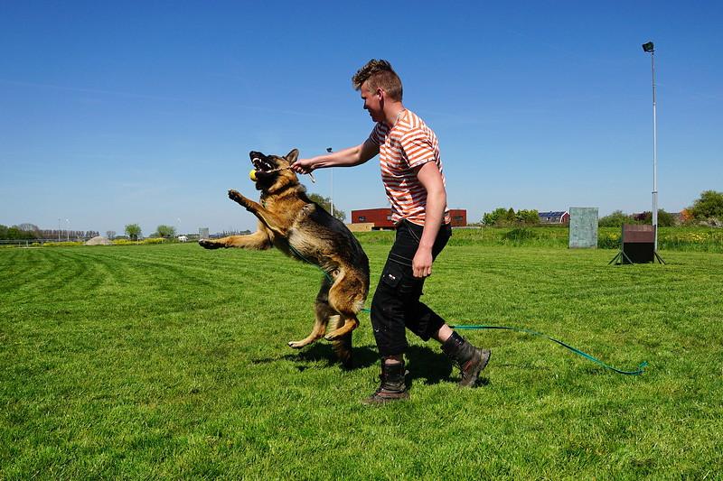 Spelen met Robert op de hondenclub