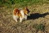 Rocco met zijn stok