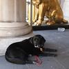 Catie Copley Fairmont Copley Plaza canine ambassador