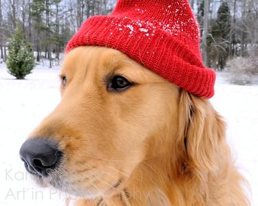 Ski Dog, color