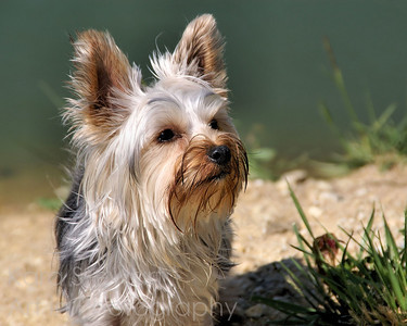 Nellie on the Beach