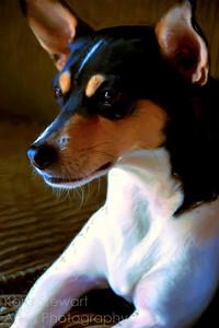 Toby 1