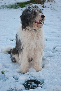 Snow Dog-0029