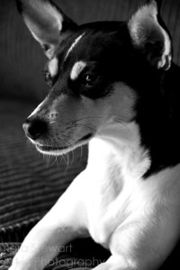 Toby 1 black and white