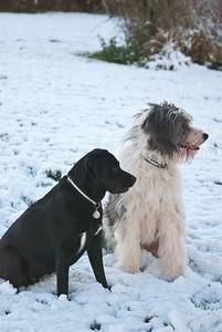 Snow Dog-0057
