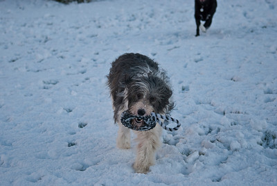 Snow Dog-0081