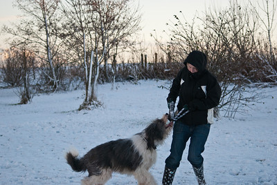 Snow Dog-0074