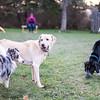 Skylar, Tanner and Ellie