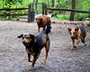 Lower Frick Park, Dogs, Pittsburgh, Hot Dog 029